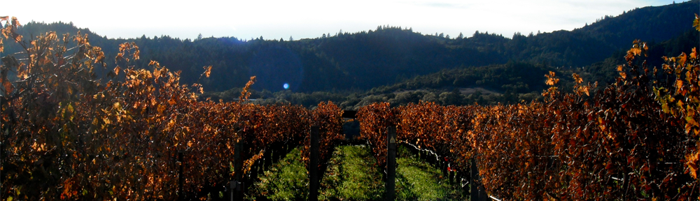 header_winery.png