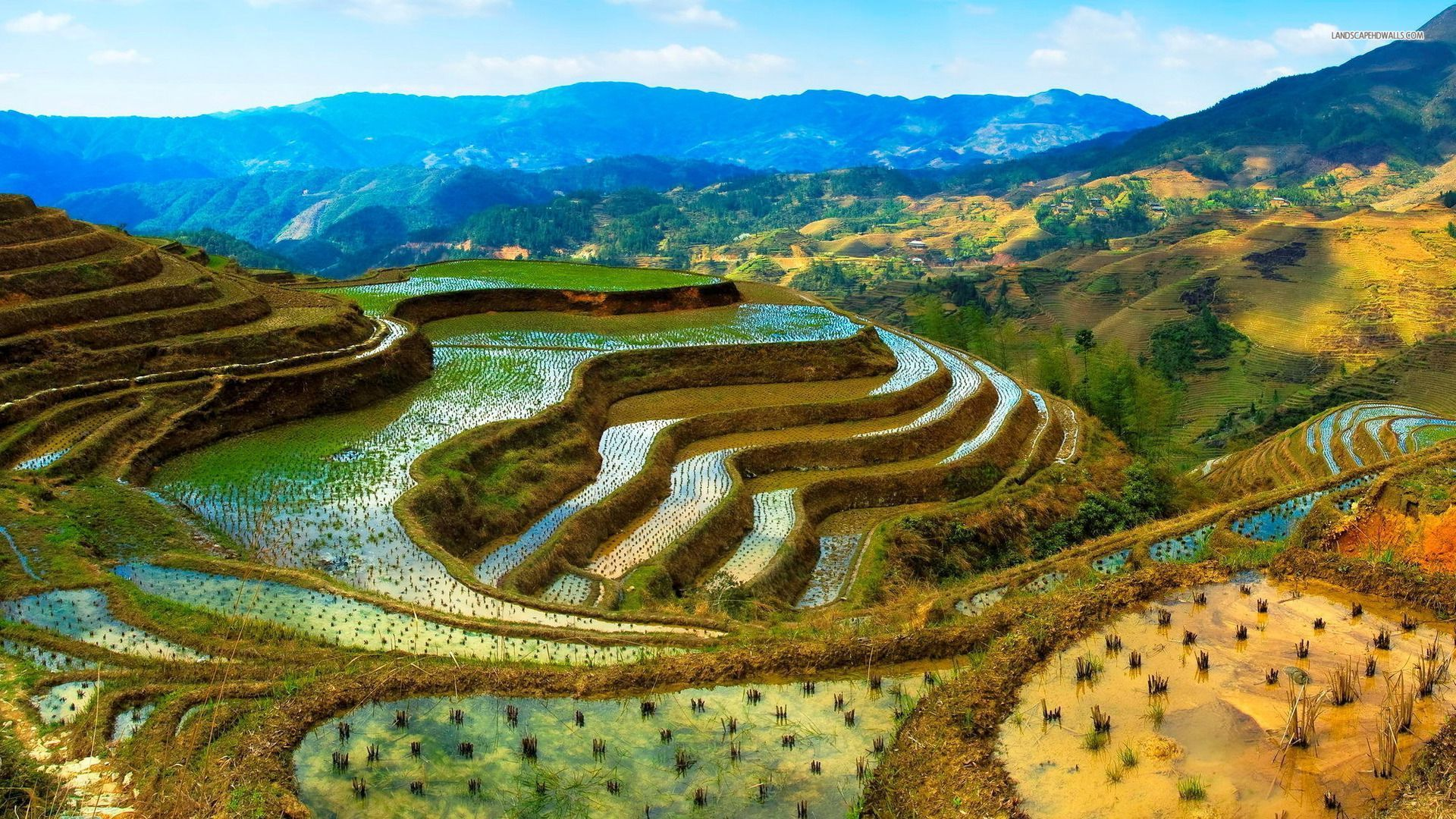 Rice terrace hi i 39 m tilo for What is terracing